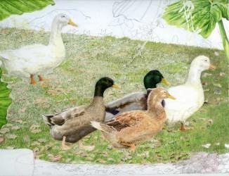 Mes Amis Dans le Parc